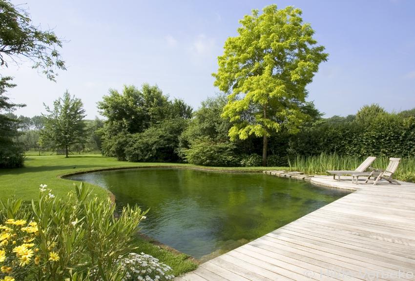 Zwemvijver in tuin losse vorm u de mooiste zwembaden