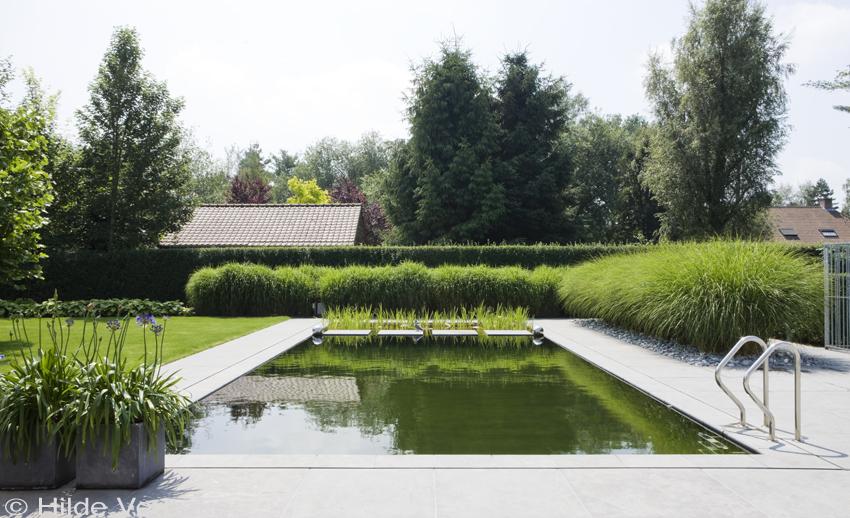 zwemvijver strakke vorm zwemvijver aan leggen in tuin