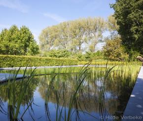 zwemvijverbouwer tuinteam legde dit biologisch zwembad aan.