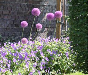 moderne tuin aanleggen