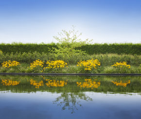 zwemvijver met natuurlijke filtering, Cools